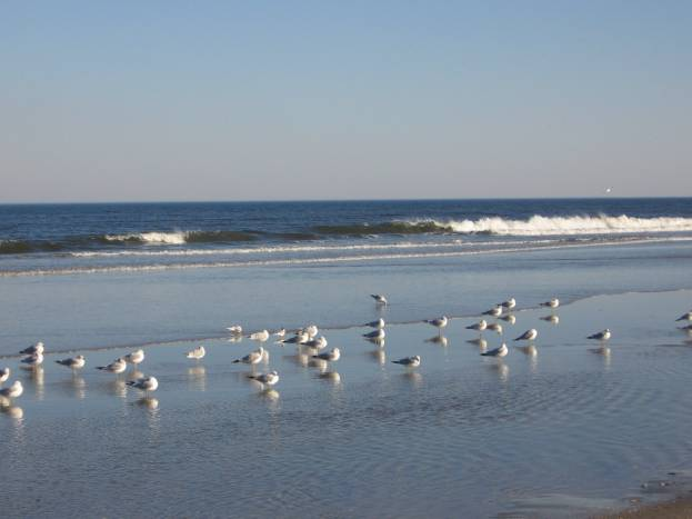 OBX Beach with Seagulls